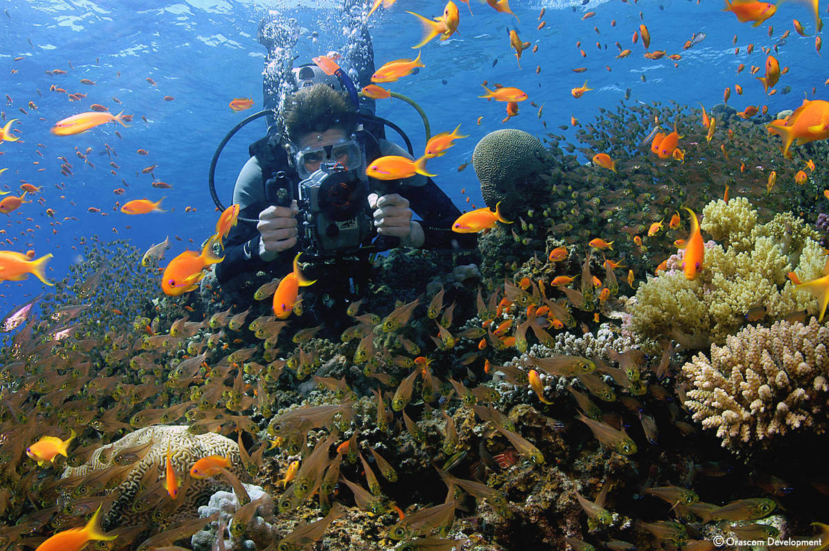 Diving deep down in the Red Sea by Taba Heights in Sinai Bay